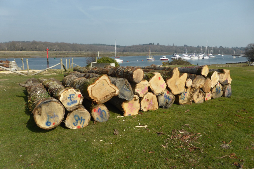 Timber for Shipwright School at Buckler's Hard