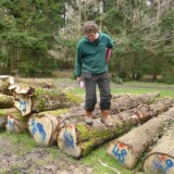 Shipwright School Blog - Tree Felling and Measuring