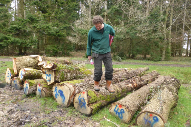 Timber for Shipwright School